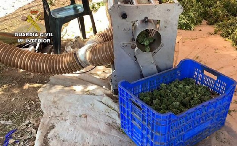 <span style='color:#780948'>ARCHIVED</span> - 22,000 cannabis plants seized from massive plantation in Extremadura