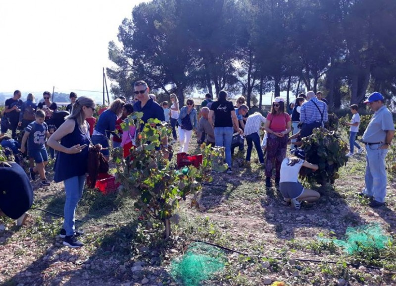 <span style='color:#780948'>ARCHIVED</span> - Until 1st December, weekend grape harvest activities at Bodegas Luzón in Jumilla