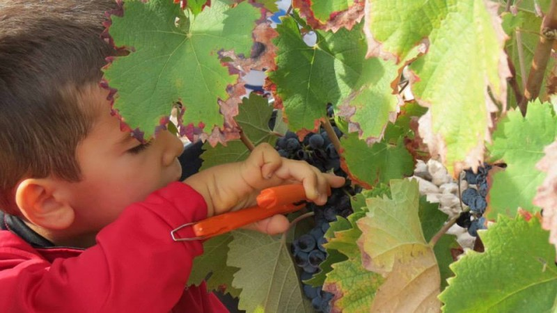Until the end of October, weekend grape harvest fun for all the family at Bodegas BSI in Jumilla