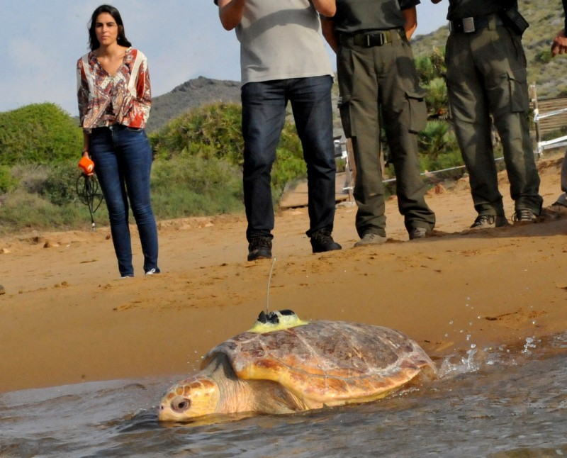 <span style='color:#780948'>ARCHIVED</span> - Two loggerhead turtles returned to the wild as the first eggs for more than a century hatch