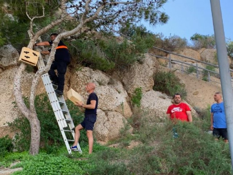 Águilas installs bat boxes to combat mosquitos around the castle