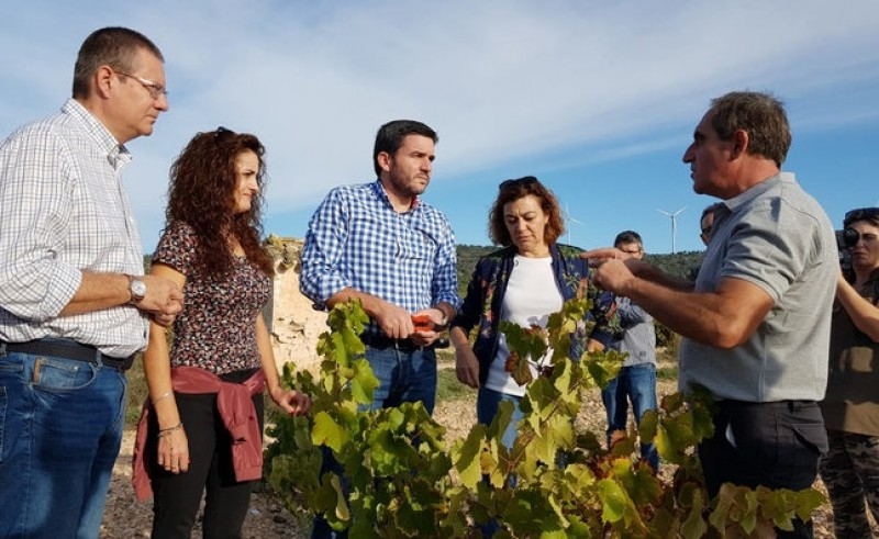 Grape harvest 60 per cent complete with top quality reported in Jumilla