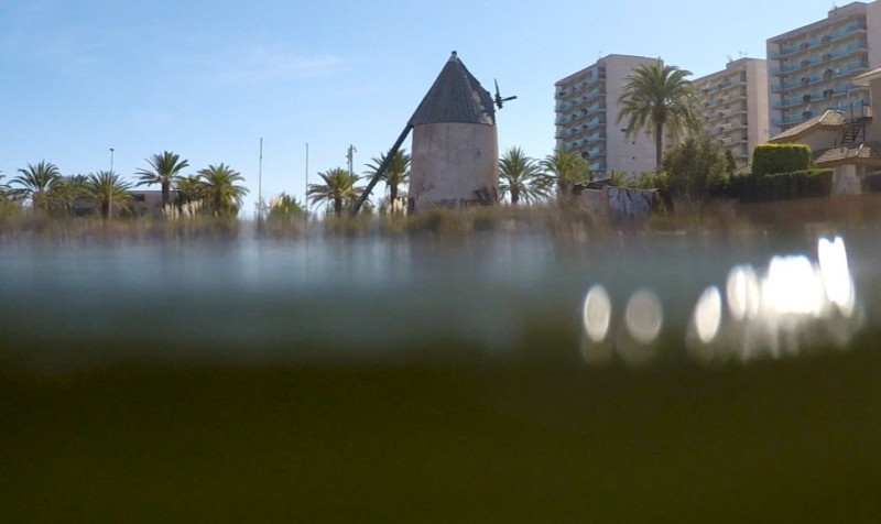 "<span style='color:#780948'>ARCHIVED</span> - Scientists warn that the ""green soup"" is returning to the Mar Menor"