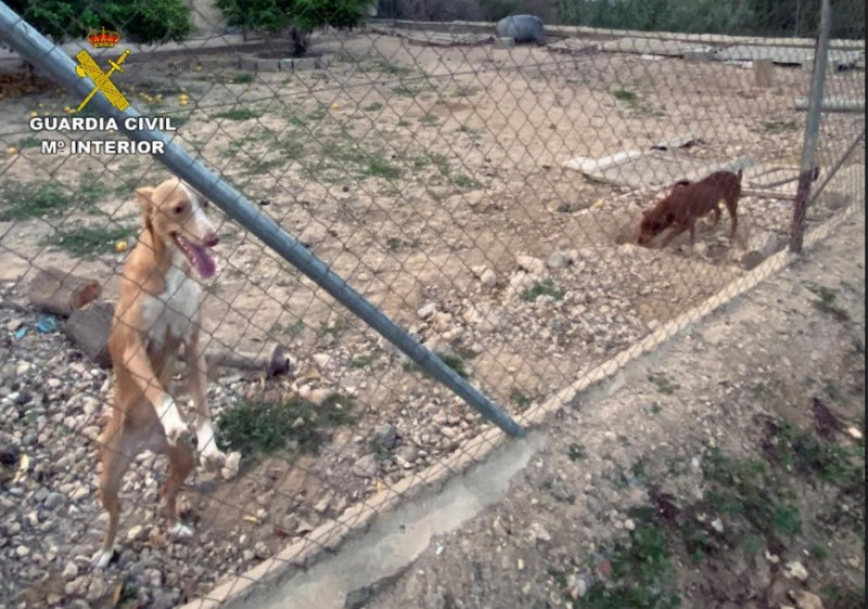 <span style='color:#780948'>ARCHIVED</span> - 85-year-old accused of maltreating animals in Alhama de Murcia