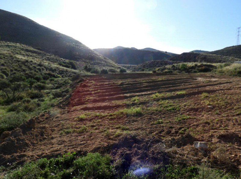 <span style='color:#780948'>ARCHIVED</span> - Illegal land clearance reported in the mountains between Lorca and Águilas