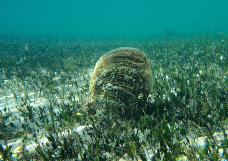 <span style='color:#780948'>ARCHIVED</span> - Aquarium arks for seahorses and fan mussels facing possible extinction in the Mar Menor