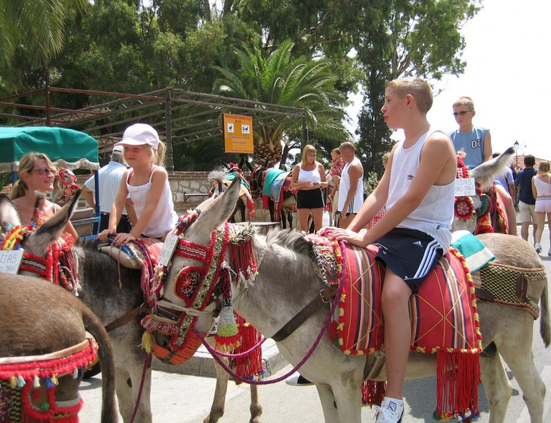 <span style='color:#780948'>ARCHIVED</span> - Costa del Sol donkey taxis awarded charter of workers' rights