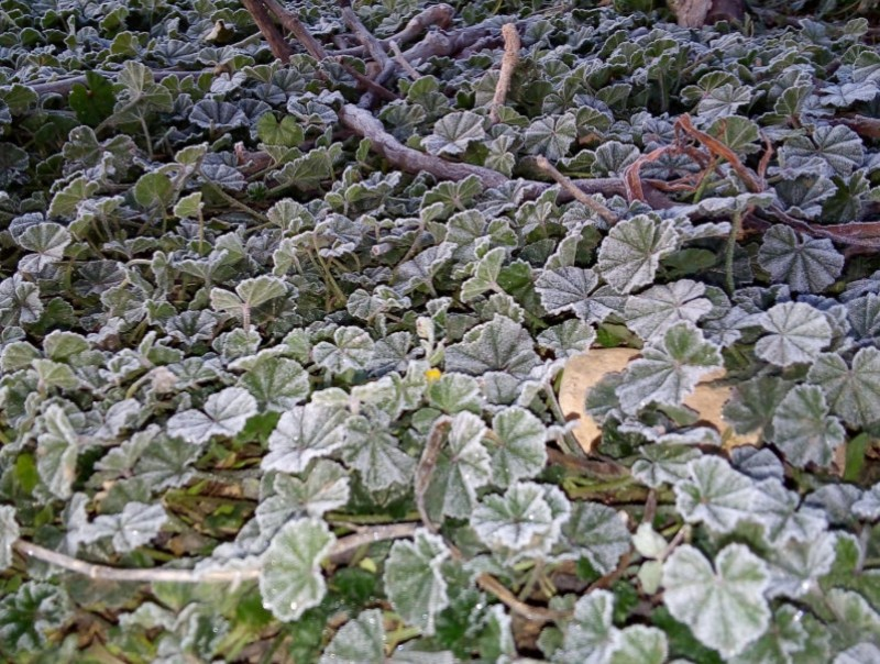 <span style='color:#780948'>ARCHIVED</span> - Frost in northern Murcia as freezing temperatures precede rain later this week
