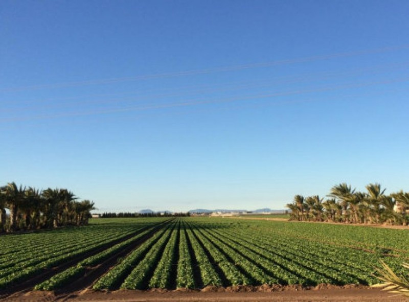 <span style='color:#780948'>ARCHIVED</span> - Outrage among Murcia farmers as the Spanish government denies them water