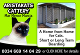 Aristakats Cattery comfortable cat accommodation Mar Menor Murcia