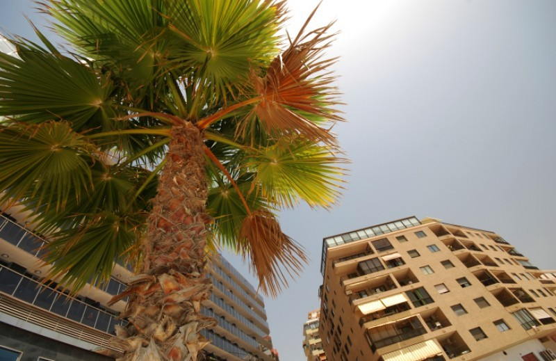 <span style='color:#780948'>ARCHIVED</span> - 2.8 per cent increase in Murcia property values last year, say Tinsa