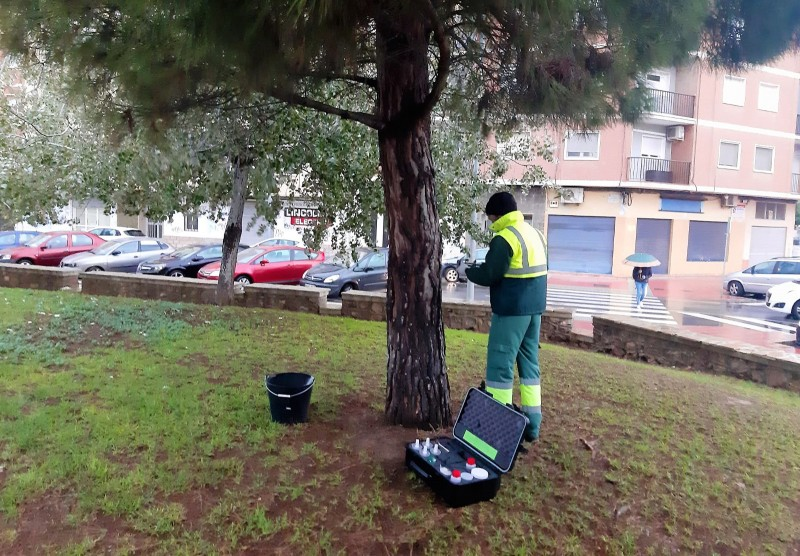 Pet owners beware as the pine processionary caterpillar season begins in Murcia