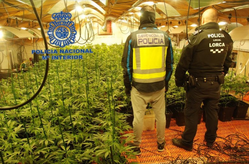 <span style='color:#780948'>ARCHIVED</span> - 1,000 marijuana plants confiscated from hydroponic plantation in Lorca warehouse