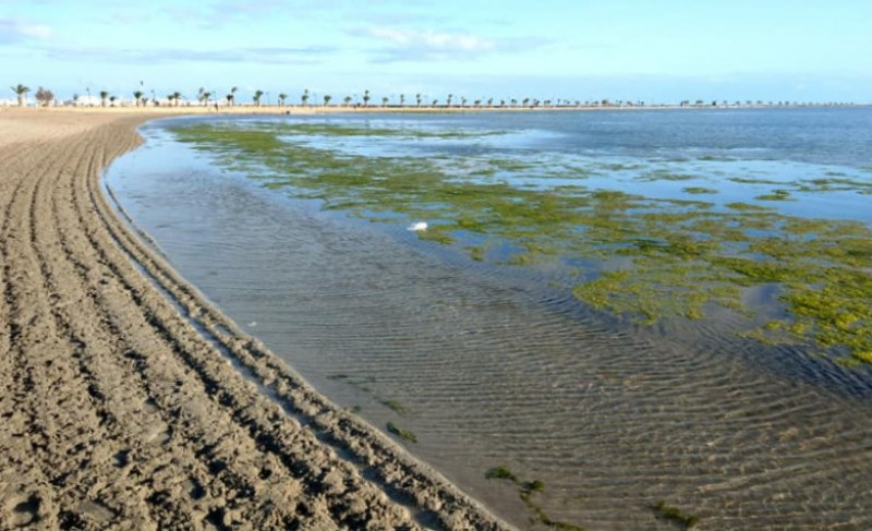 <span style='color:#780948'>ARCHIVED</span> - Green algae cleared from the Mar Menor in Lo Pagán