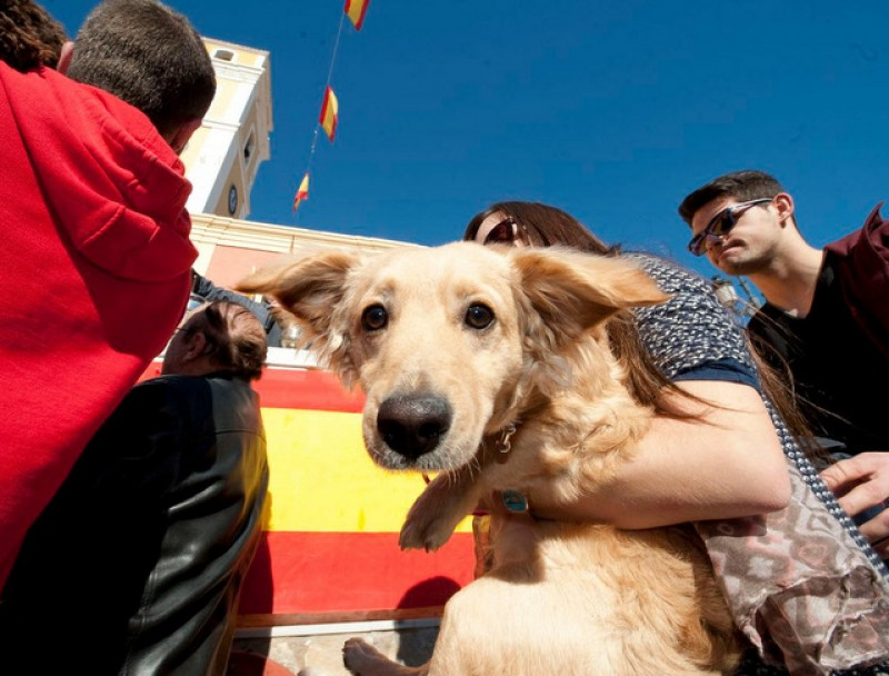 <span style='color:#780948'>ARCHIVED</span> - Friday 17th January Blessing of the animals in Cartagena