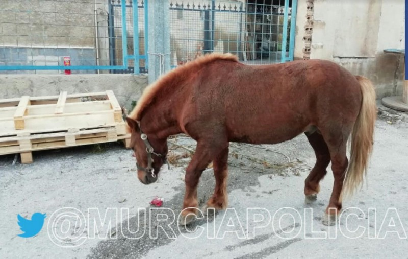 Abandoned pony rescued from main road in Murcia