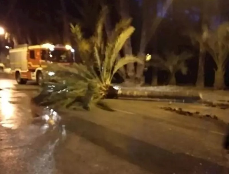 <span style='color:#780948'>ARCHIVED</span> - Four dead across Spain as Storm Gloria batters the region of Valencia