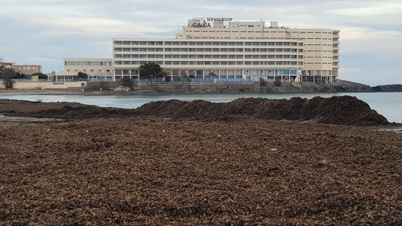 <span style='color:#780948'>ARCHIVED</span> - Seaweed piled up as a protective barrier at Playa de Galúa in La Manga!