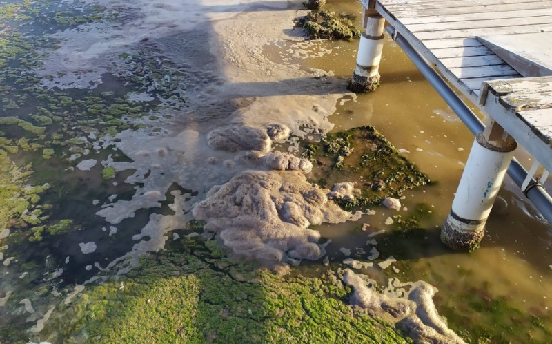 <span style='color:#780948'>ARCHIVED</span> - Green algae removed from the northern shore of the Mar Menor