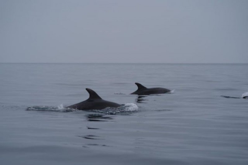 Dolphins save the day for sailing fans after cancellation of Águilas regatta