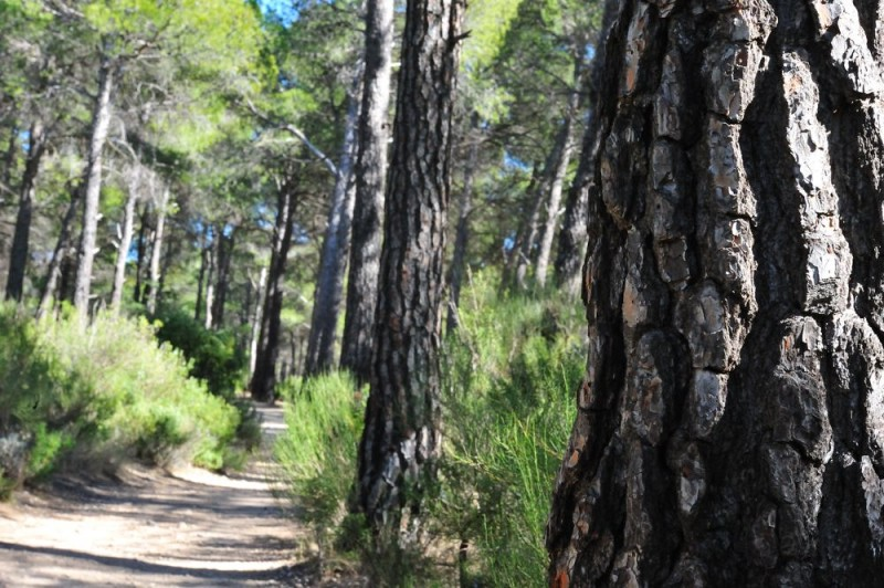 The Ricardo Codorníu walking route in the Sierra Espuña 2.2km