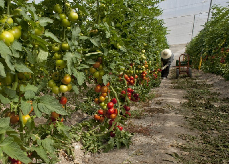 <span style='color:#780948'>ARCHIVED</span> - Murcia agriculture in overdrive to meet demand during the coronavirus emergency