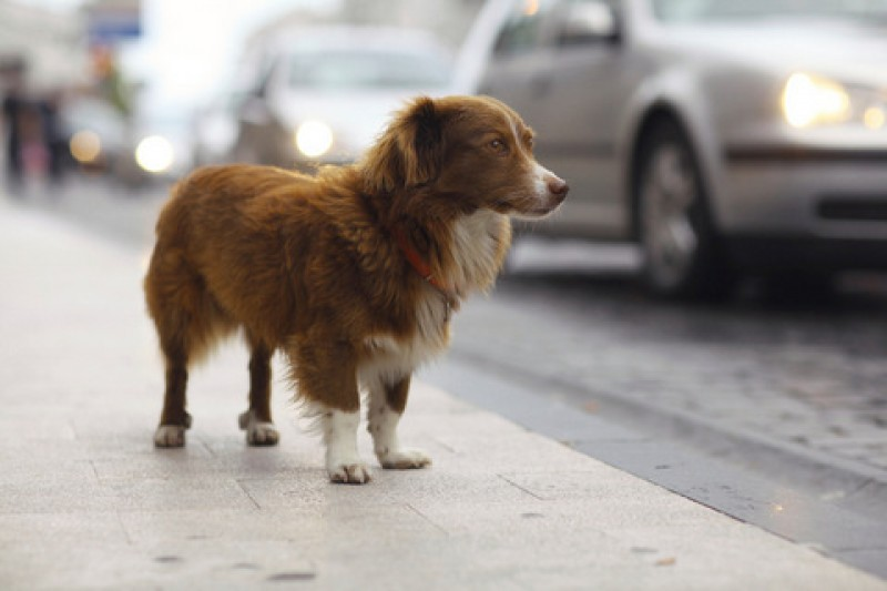 Águilas police warn dog walkers not to stray far from home