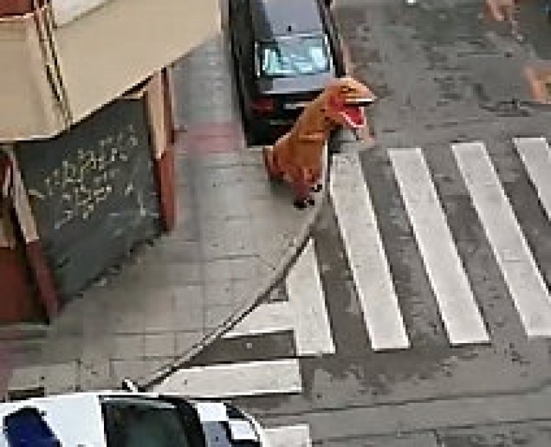 Murcia police clarify that Tyrannosaurus rex costumes are not a valid excuse for leaving the house