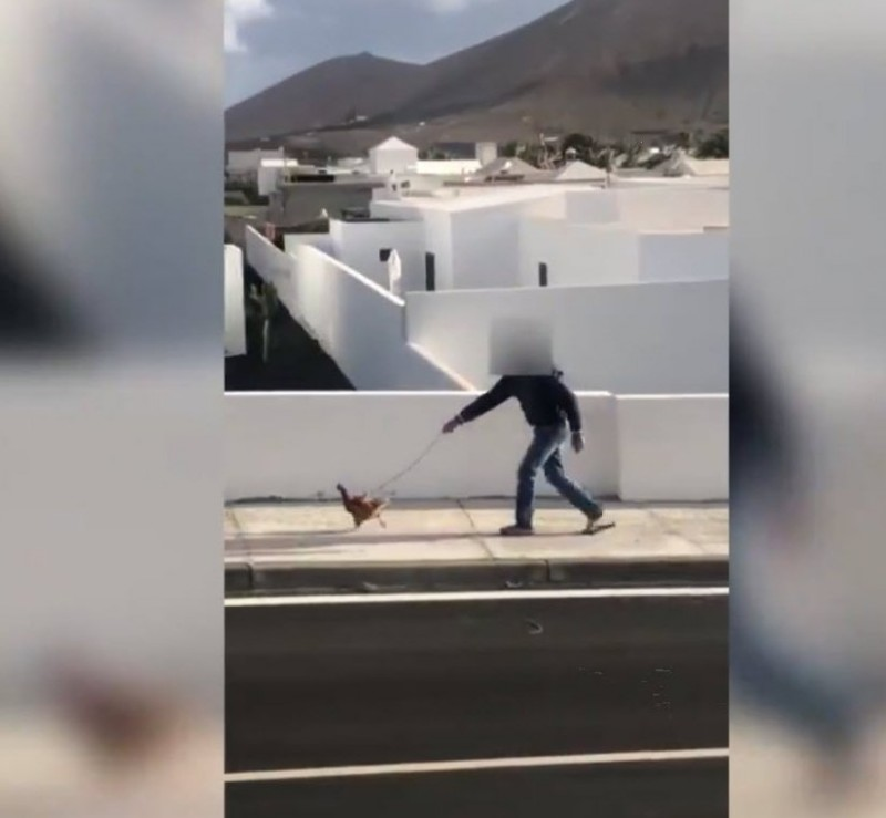 Fined for walking his chicken in Lanzarote in breach of lockdown regulations