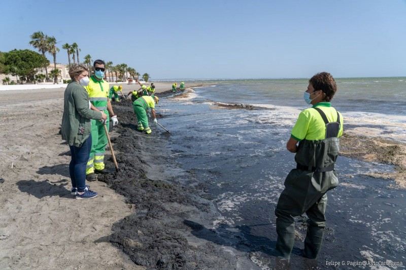 <span style='color:#780948'>ARCHIVED</span> - Murcia government commits 90 personnel to clean Mar Menor beaches