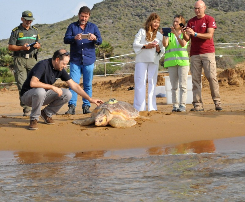 <span style='color:#780948'>ARCHIVED</span> - Calblanque baby turtles now have hard shells and are growing up rapidly