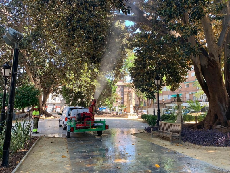 Safety showers to prevent monster trees collapsing in Murcia City