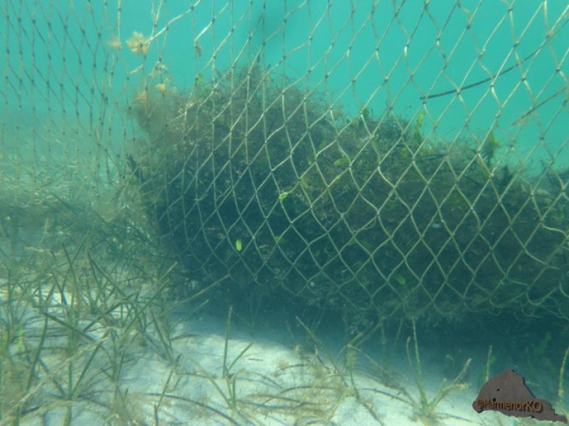 Tourism versus ecology; jellyfish nets go down in the Mar Menor