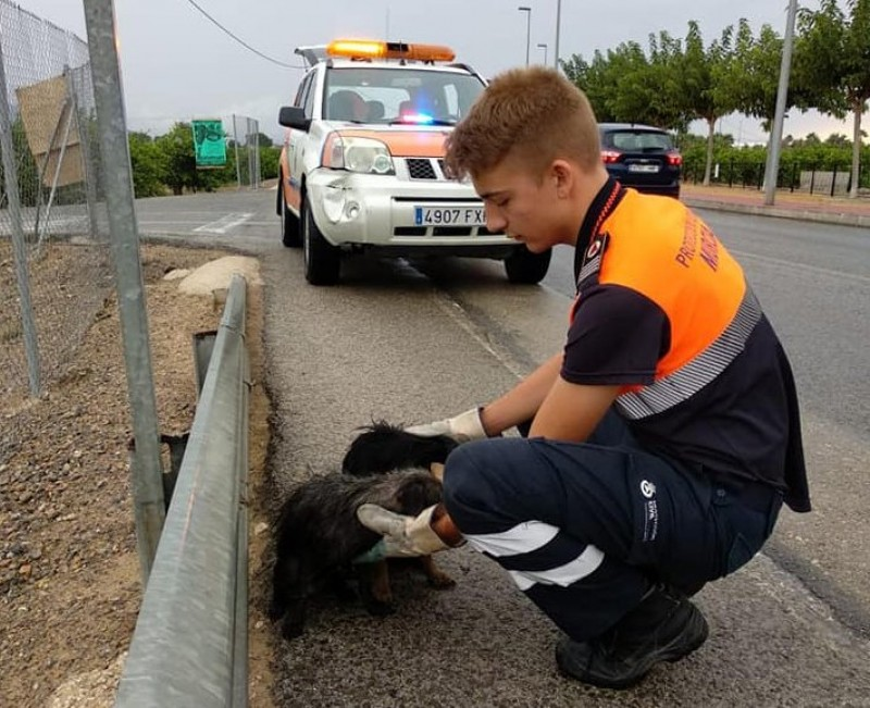 <span style='color:#780948'>ARCHIVED</span> - Number of abandoned dogs in Spain has increased 25 percent since end of confinement
