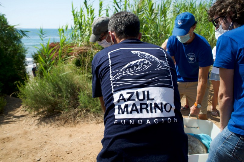 <span style='color:#780948'>ARCHIVED</span> - 3,000 kilometre journey of the Colomera turtle from Valencia to the Greek Islands