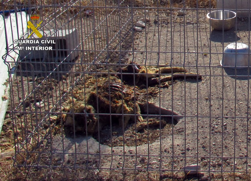 <span style='color:#780948'>ARCHIVED</span> -  Investigation into Mazarrón kennels discovered shocking neglect