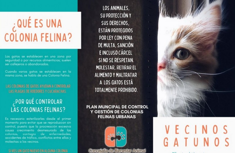 <span style='color:#780948'>ARCHIVED</span> - Los Alcázares Council promotes plan to manage feral cat colonies