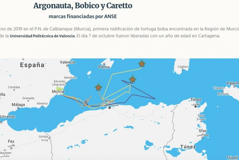 <span style='color:#780948'>ARCHIVED</span> - Murcian young loggerhead turtles tracked to African and Balearic coastlines