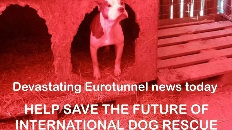 <span style='color:#780948'>ARCHIVED</span> - Dog rescue organisations concerned about new Eurotunnel restrictions + UPDATE