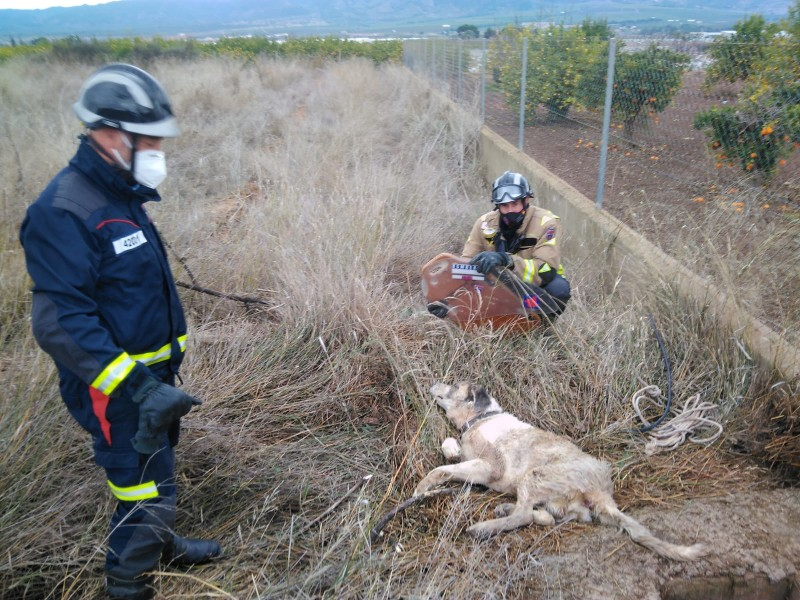 <span style='color:#780948'>ARCHIVED</span> - Firemen pull trapped dog out of a well in Librilla
