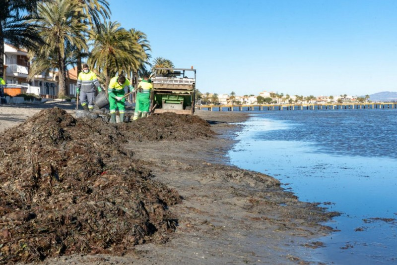 <span style='color:#780948'>ARCHIVED</span> - Sea grass and algae being cleared from Mar Menor beaches again