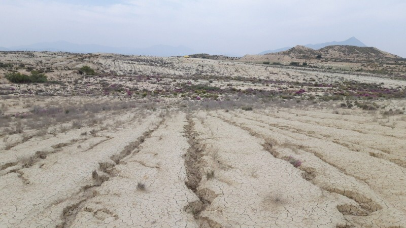 Murcia region buys three new areas of wetlands and salt marshes to guarantee their conservation