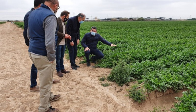 Biofertilizers seek to reduce nitrate run-off and maintain crop viability; Torre Pacheco trials underway