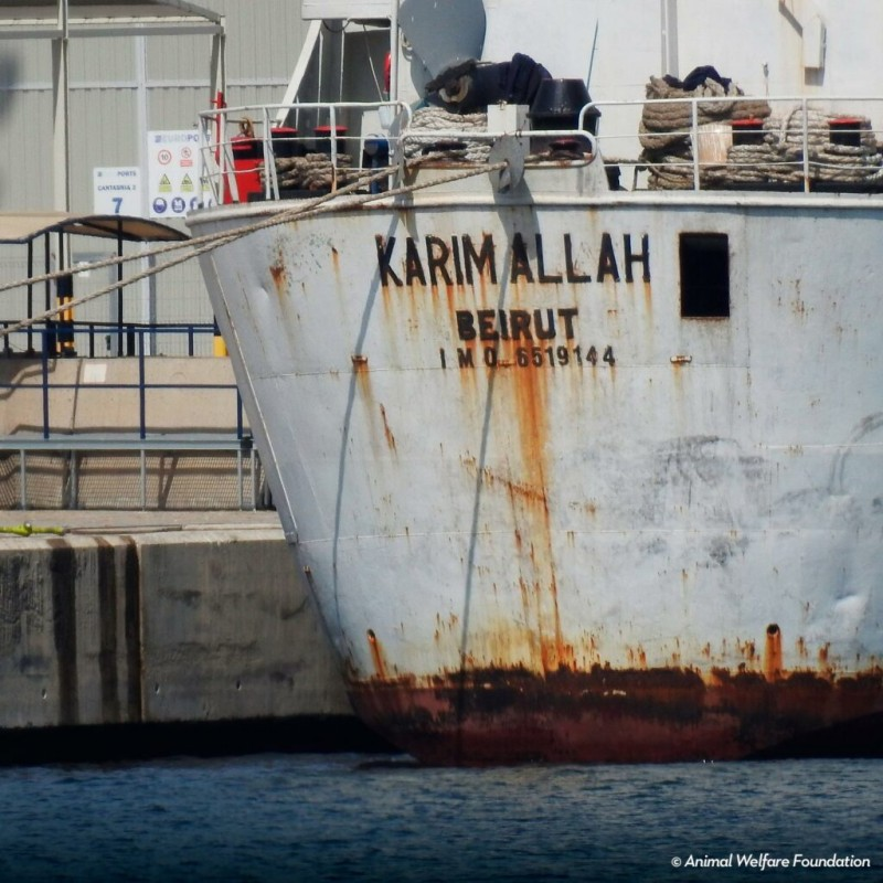<span style='color:#780948'>ARCHIVED</span> - Cartagena port re-opens for livestock exports as 864 cattle are slaughtered from Karim Allah