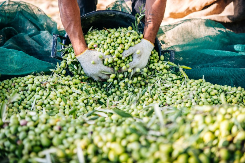 <span style='color:#780948'>ARCHIVED</span> - Jaen University Sustainolive project aims to improve sustainability in olive farming sector