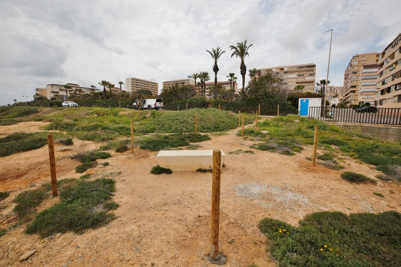 <span style='color:#780948'>ARCHIVED</span> - Torrevieja undertakes conservation work in Cabo Cervera to protect the cat's head jarilla