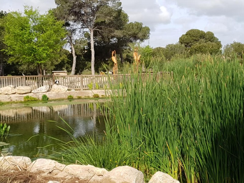 <span style='color:#780948'>ARCHIVED</span> - Parque El Recorral in Rojales looking pretty for spring