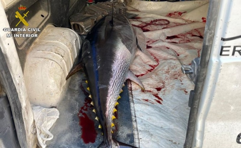 <span style='color:#780948'>ARCHIVED</span> -  Rogue fishermen illegally reel in bluefin tuna off coast of Alicante province