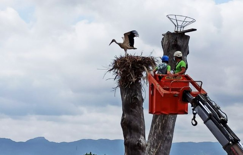 Terra Natura Murcia places tracking bands on 5 baby storks