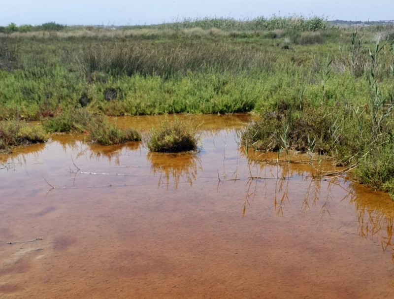 Mosquito plague hits residential areas near the salt lake in Torrevieja